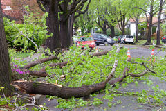 Tree branch in road after recent storms in Northern California Stock Images