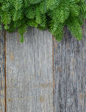 Tree branch on rustic wooden background Royalty Free Stock Photos