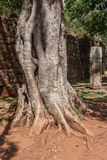 Tree Branch San Ignacion Mini Mission Argentina Royalty Free Stock Photos