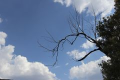 Tree branch in the shadows against blue sky Stock Image