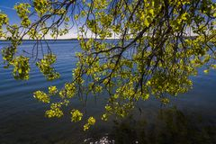 Tree branch on the shore of Lake Monona, Madison, Wisconsin. Tree branch on the shore of Lake Monona in Madison, Wisconsin royalty free stock photography