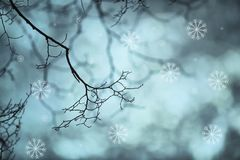 Tree branch silhouette with abstract snowfall. Beautiful tree branches without leaves with added artistic snowflakes. Abstract snowfall background. Selective royalty free illustration