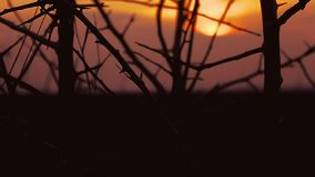 Tree branch silhouette apricot on orange sunset. Tree  branch silhouette apricot on orange sunset stock video