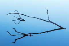 Tree branch in silhouette Stock Photos