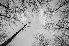 Tree branch silhouette. Silhouette of a branch tree on gray sky Stock Images