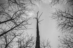 Tree branch silhouette. Silhouette of a branch tree on gray sky Royalty Free Stock Photography
