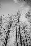 Tree branch silhouette. Silhouette of a tree on grey sky Stock Photos