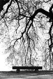 Tree Branch silhouette at the lake side B&W Royalty Free Stock Photos