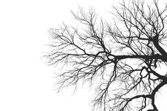 Tree Branch Silhouette  without leaves Royalty Free Stock Photography