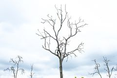Tree branch silhouette on nature background. And cloudy royalty free stock photography