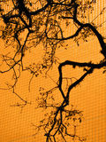 Tree Branch Silhouette on Orange Wall. Tree branch silhouette on orange checkered wall Royalty Free Stock Photo