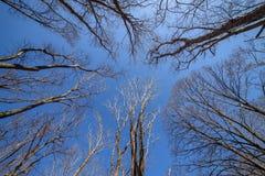 Tree branch silhouette. Royalty Free Stock Photos