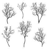 Tree branch silhouette set Royalty Free Stock Images