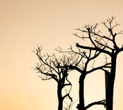 Tree branch silhouette. On sun light background Stock Photos