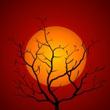Tree Branch Silhouette Sunset Royalty Free Stock Images