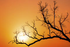 TREE BRANCH SILHOUETTE SUNSET Royalty Free Stock Photo