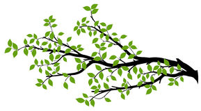 Tree Branch Silhouette, Vector Graphics. Tree branch with green leaves over white background. Vector graphics. Artwork design element Royalty Free Stock Photos