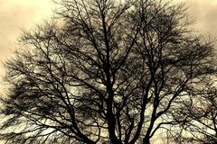 Tree branch silhouette Royalty Free Stock Images