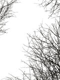 Tree branch silhouette Royalty Free Stock Photography