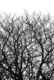 Tree branch silhouettes (black and white) Stock Photo