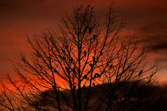 Tree branch sillhouette with bird Stock Photo