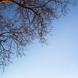 Tree branch on sky background. Nature. Royalty Free Stock Images