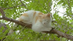 On a tree branch is sleeping cat slow motion video. On a tree branch is sleeping cat red light slow motion video stock footage