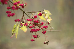 Tree branch with small autumn flowers Stock Images