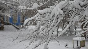 Tree branch in the snow in the city street snow winter nature outdoors. Tree branch in the snow in city street snow winter nature outdoors stock video