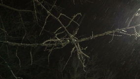 Tree branch on the snow falls at night. Video 4k stock footage