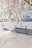 Tree branch with snow Royalty Free Stock Photography