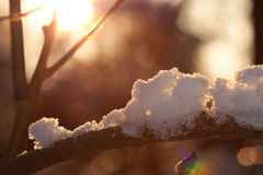 Tree branch with snow and ice Stock Images