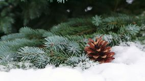Fir cones on the fir branch covered with snow. Tree Branch in the Snow Winter Forest.Fir cones on the Fir Branch Covered with Snow. Christmas Background stock footage