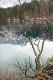 Tree branch and the splendid lake of Fusine Royalty Free Stock Photo