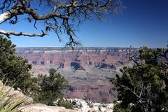 Tree branch stretching above the Grand Canyon Stock Photography