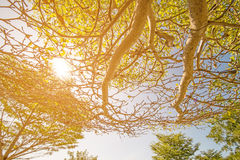 Tree branch Stock Photo
