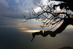 Tree branch while sunrise above sea. View to the tree branch with Black sea on the background, Crimea, Ukraine Royalty Free Stock Photo