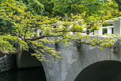 Tree branch and temple bridge Stock Images