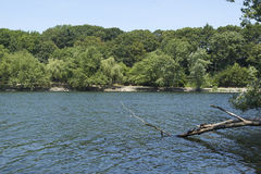 Tree branch with turtles. Lake with a tree branch with sunbathing turtles Royalty Free Stock Photography
