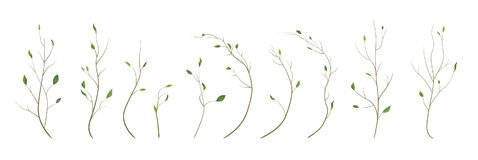 Tree branch, twig designer art different foliage natural branches, leaves, anniversary elements in watercolor style set collection Stock Photos