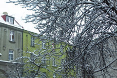Tree branch under snow in the old town. Nature. Royalty Free Stock Photo