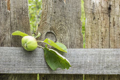 Tree branch with unripe apple lays on an old wooden the fence. In a village Royalty Free Stock Photography