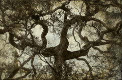 Tree branch vintage background Royalty Free Stock Photos