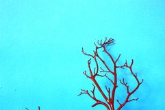 Tree Branch Wall Background Royalty Free Stock Photography