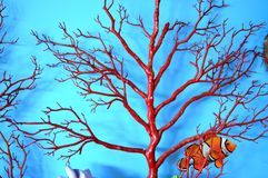 Tree Branch on Wall Background Royalty Free Stock Photos