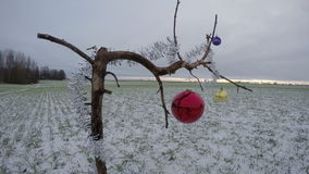 Tree branch on winter crop field with Christmas bauble, time lapse 4K. Tree branch on winter crop field with Christmas bauble and sunrise, time lapse 4K stock video