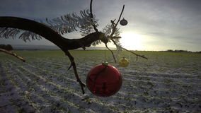Tree branch on winter  field with Christmas bauble and sunrise,  4K. Tree branch on winter crop field with Christmas bauble and sunrise,  4K stock video