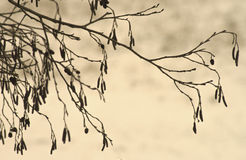 Tree branch in winter Royalty Free Stock Photography