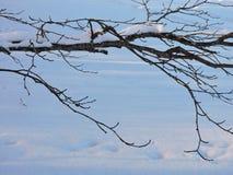 Tree branch, winter Royalty Free Stock Image