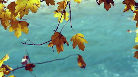 Tree branch with yellow autumn leaves over water. stock video
